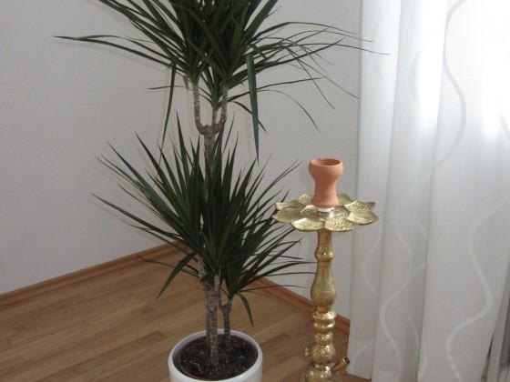 Sultan unter Palmen