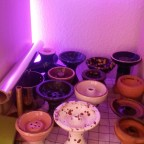 Berti's Sammlung